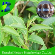 GMP factory supply oolong tea extract