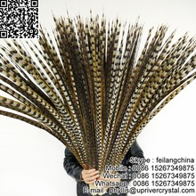 The stage prop natural reeves pheasant tail feather for carnival