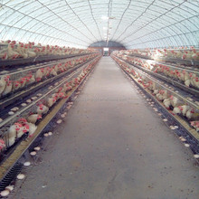 A and H type automatic zambia chicken farm coop chicken cage for egg layer