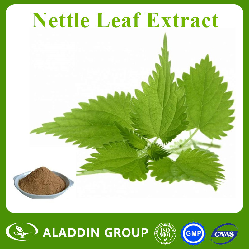 High Quality Reasonable Price Natural Organic Nettle Leaf P.E. 1%-90% Beta-sitosterol Extract Powder