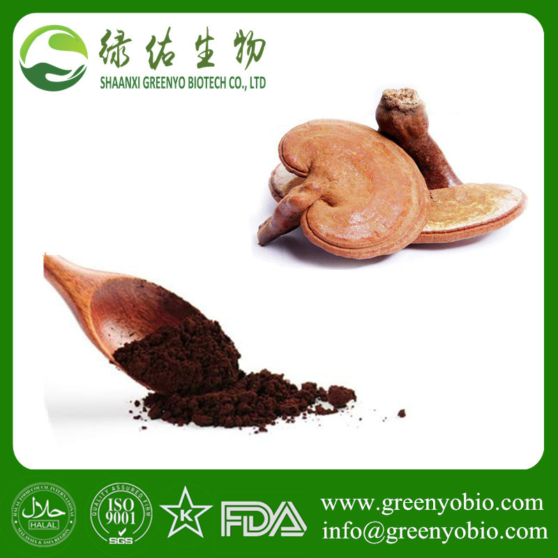Chinese supplier ganoderma lucidum spore powder oil softgel ganoderma lucidum extract