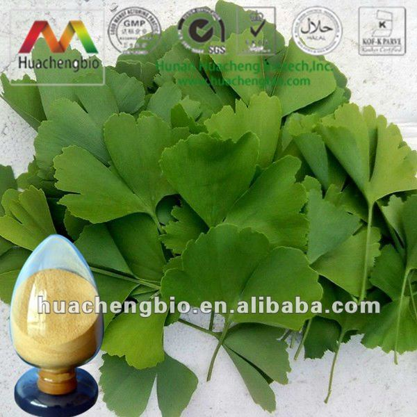 ISO&HACCP Water Soluble Ginkgo Leaf P.E.