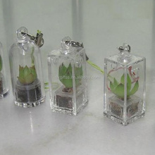 OXGIFT Made in China Alibaba wholesale Manufacture Portable gardening Mini Aloe plant