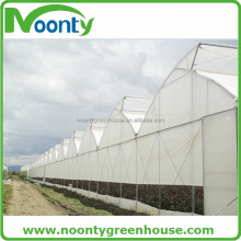 Multi-spans Saw-tooth Type Greenhouse