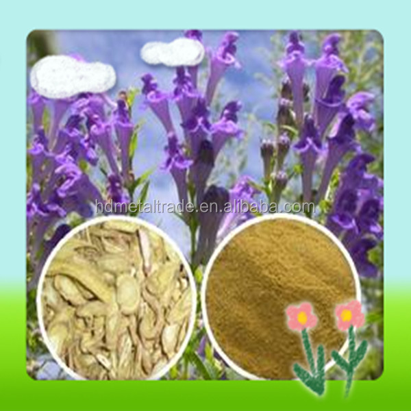 Natural baicalein 98% HPLC scutellaria baicalensis root extract herb extraction solvent extraction