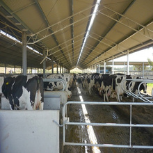 construction materials used steel structure cow sheds