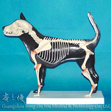 R190109 Dog Half Skeleton Anatomical Model