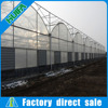 Multi Span Agricultural Greenhouses Type Commercial