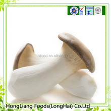 Hot sale good quality fresh King oyster mushroom