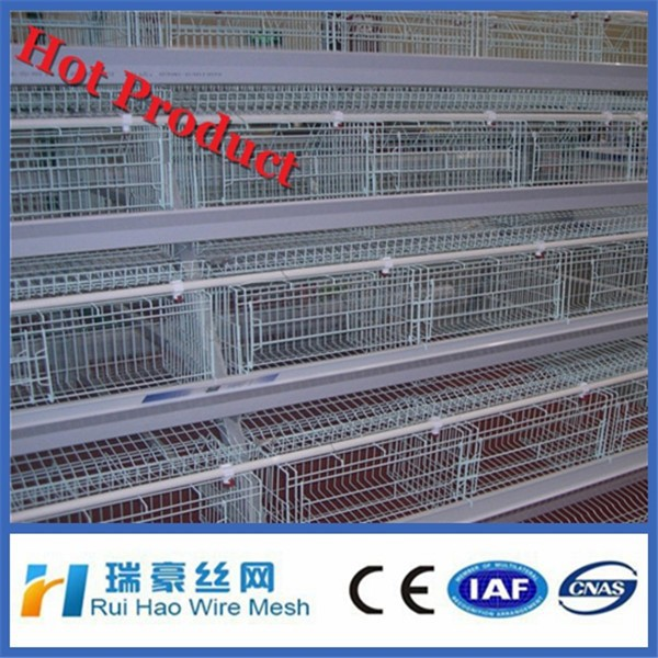 cheap automatic chicken layer cage for sale in philippines