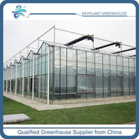 Venlo Structure Greenhouse Degradable Venlo Agricultural