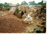 PKS (PALM KERNEL SHELL ) WASTE