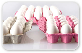 Egg Tray Carton Egg Packing Turkey