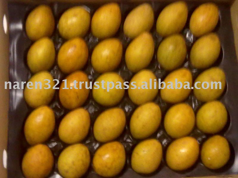 Fresh Sapota Chikoo Sapodilla and good quality from indian exporter