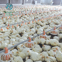 Broiler farming equipment Automatic poultry feeding line system for broiler farm