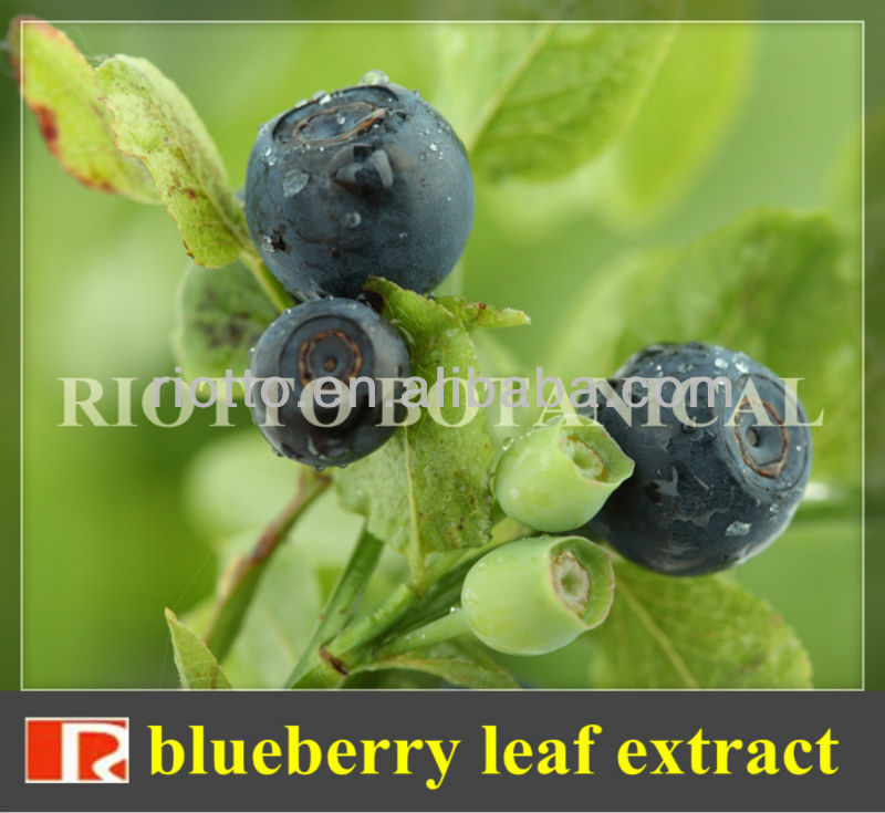 GMP standard factory supply Nature blueberry leaf extract, Anthocyanidins 5%-30%