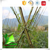 100% Natural Bamboo Cane Raw Materials for Plant