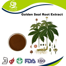 Golden Seal Root P.E. Extract Powder Export with high quality