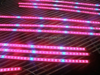 Top quality factory price led grow light strip with rate of red & blue 3:1