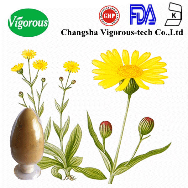 100% High quality plant Arnica Extract powder/Arnica powder/Arnica montana extract