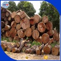 Teak wood logs/ sawn timber at the most competitive price