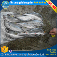 Frozen Horse Mackerel with Good Quality and Fat Content 15%