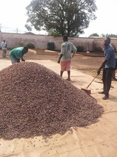 Roasted Cocoa beans for sale = USD 10 per kg,FOB Douala