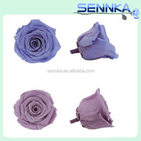 Popular Items For Preserved Flowers On UAE Wholesale Best Quality Preserved Flower Roses From Yunnan Sennka Flower
