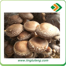buy dried shiitake mushrooms from nanyang