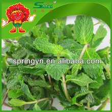 Organic Fresh Mint Leaves for sale