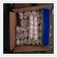 pure white garlics 2015 china origine pure white garlic from china