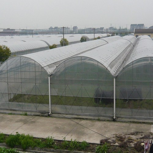 Tropical Multi Span Polycarbonate Sheet Greenhouse For Agriculture