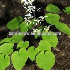 Weed Leaf Pure 5-60% Epimedium P.E. brevicornum horny goat weed extract tablets