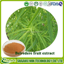 100% Natural belvedere fruit extract / broom cypress fruit