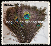 Big Eye Peacock Feather For Sale