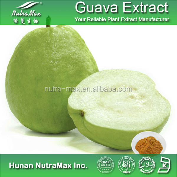 Natural Food Additive Guava Leaf Extract Powder , Guava Leaf Tea , Guava Extract 4:1~ 20:1