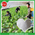 Drip Irrigation Fertilizer MKP 0-52-34 For Cucumber
