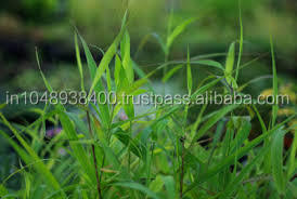 100% Fresh & Natural Palmarosa Oil Excellent Quality & Reasonable Price