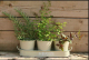 three pots,metal herb flower pot with seed and soil