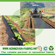 Fruit protection nonwoven fabric bag/agriculture pp non wovens spunbond /Crop Covers material cloth/weed mat