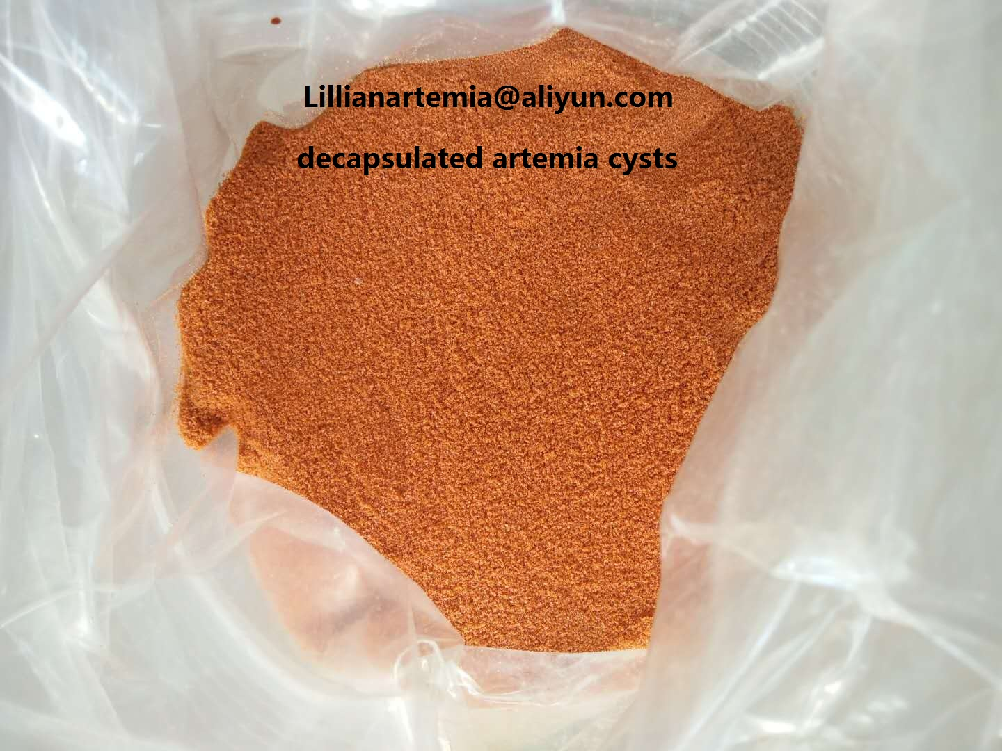 good quality artemia cysts brine shrimp eggs high hatching rate made in China wholesale price