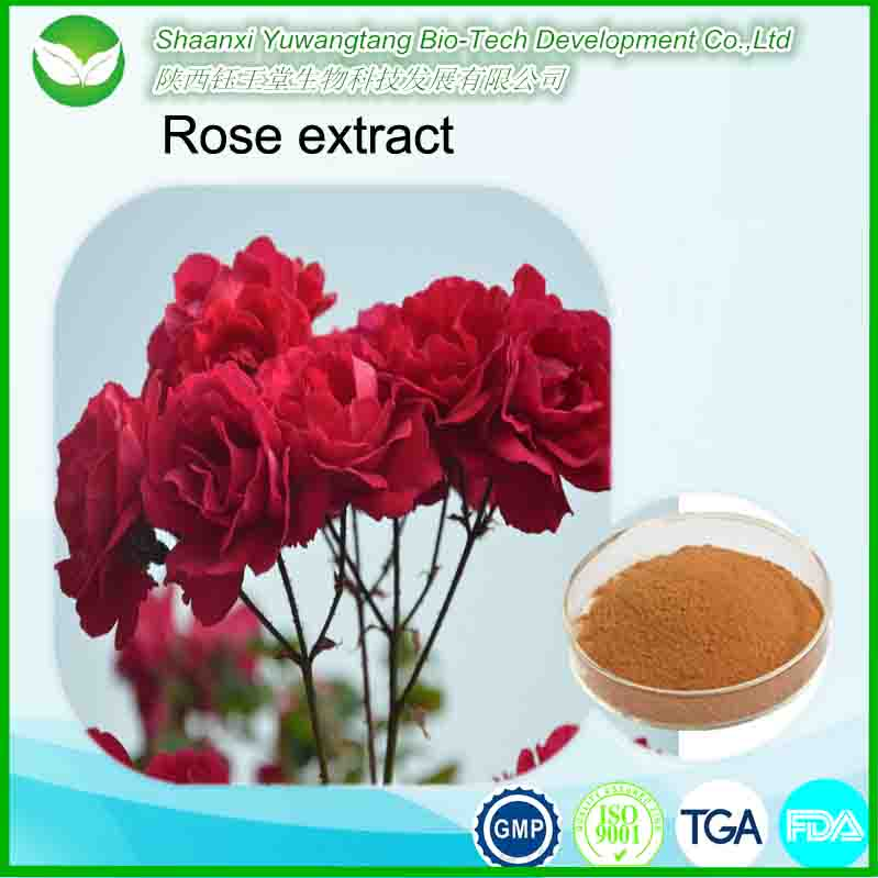 Best selling Chinese natural herb high quality Rose Hips Extract/ Rose extract