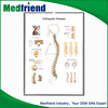 Wholesale High Quality Anatomy Charts