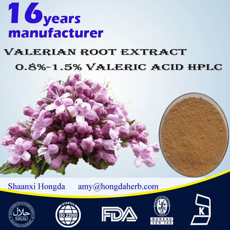 Valerian Root Extract 0.4%-0.8% Valeric Acid 100% natural from GMP factory High quality