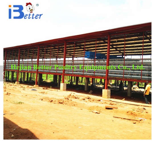 New design cage manufacturer of chicken sheds (Welcome to visit our Nigeria Farm)