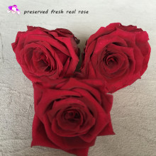 best selling items wholesale natural fresh flower preserved real rose