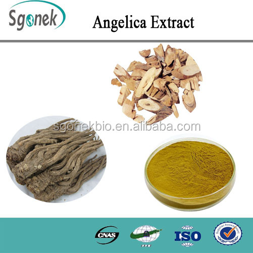 100% Natural plant extract high quality Angelica Extract in stock !!!