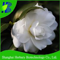 camellia japonica/tea flower/camellia flower seeds for planting