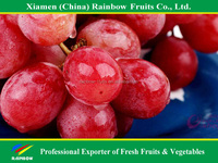 Yunnan Red globe grape fresh fruit of red grape Xinjiang Red grape from China import export companies pune