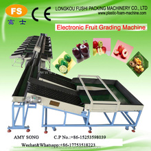 Hot Sale Fruit &Vegetable Processing Washing Cleaning Grading Machine